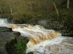Stainforth Foss - 3. Click for bigger picture.